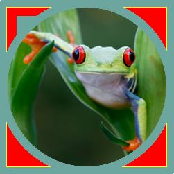 amazon_lagoon.web.icon
