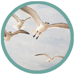surf-with-birds-web-icon