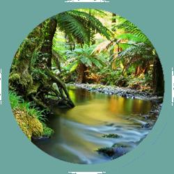 jungle-stream-web-icon