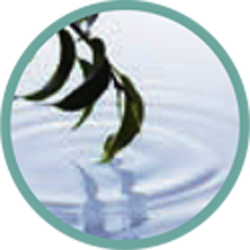 tranquility-web-icon