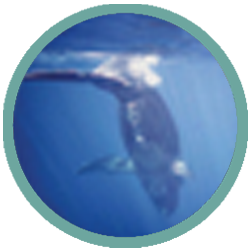 whales-heavy-surf-web-icon