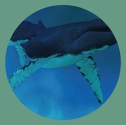 sound-oasis-maui-surf-with-whale-lightsurf-8hr